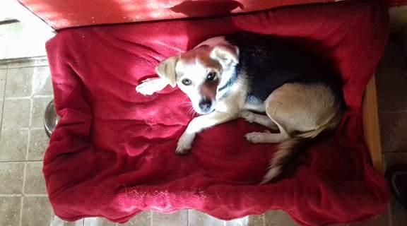 CINCA une petite chienne adorable - SERBIE 23021910
