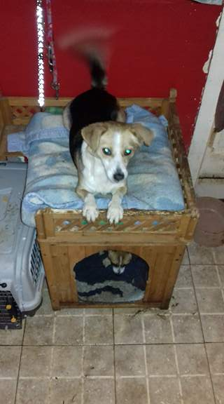 CINCA une petite chienne adorable - SERBIE 24203810