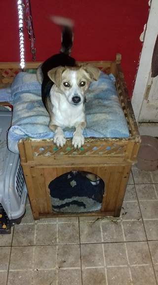 CINCA une petite chienne adorable - SERBIE 24257410