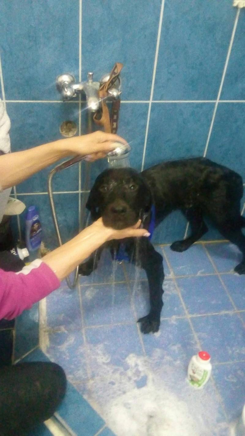 ALIB un chien merveilleux - BULGARIE 24992710