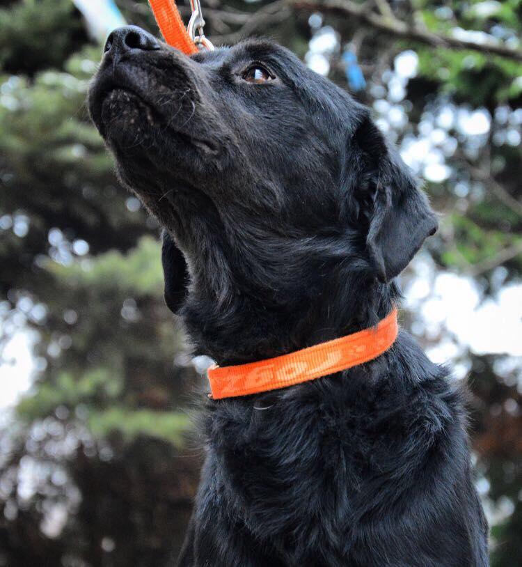 ALIB un chien merveilleux - BULGARIE 25630412