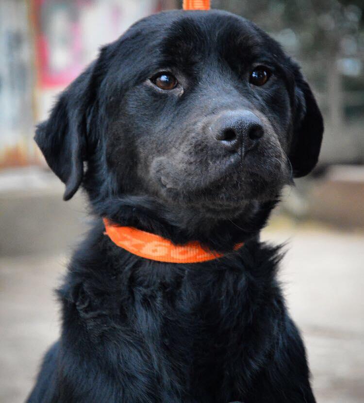 ALIB un chien merveilleux - BULGARIE 25675211