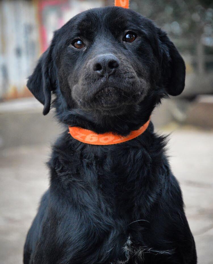 ALIB un chien merveilleux - BULGARIE 25975511