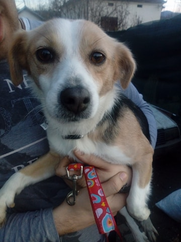 CINCA une petite chienne adorable - SERBIE 27400110