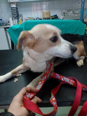 CINCA une petite chienne adorable - SERBIE 27720911