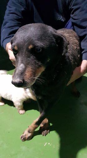 MICI (CRNKA) petite chienne des rues - SERBIE 27781910
