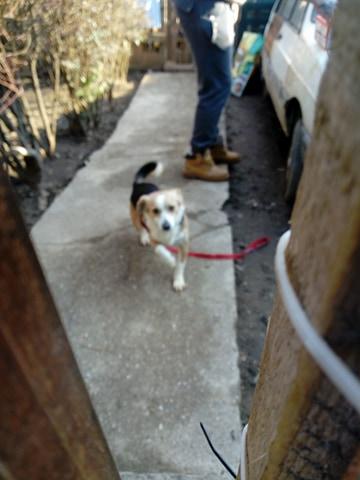 CINCA une petite chienne adorable - SERBIE 27848610