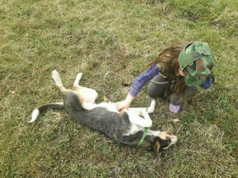 DUNJA une jolie chienne tricolore - SERBIE 27848710