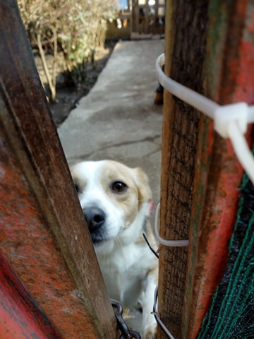 CINCA une petite chienne adorable - SERBIE 27848910