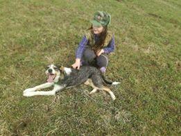 DUNJA une jolie chienne tricolore - SERBIE 27939610