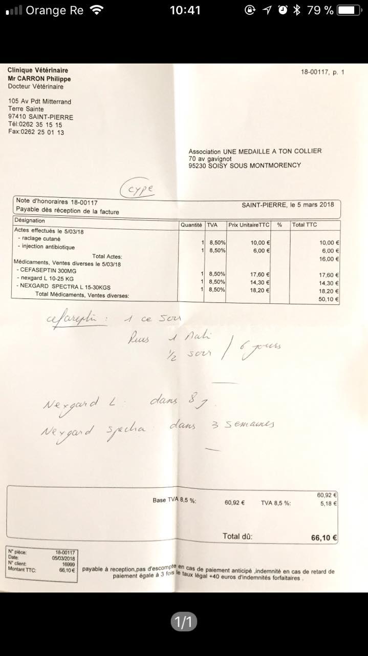 CYPE croisé berger hollandais - REUNION 28471810
