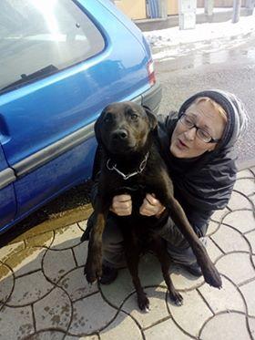JONNY magnifique croisé labrador noir - en FA dpt 67  28534310