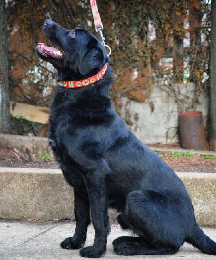 ALIB un chien merveilleux - BULGARIE 29186810