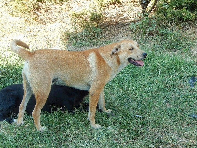 ROSCO un bon chien de famille en FA ds le 67 - SERBIE 29214710