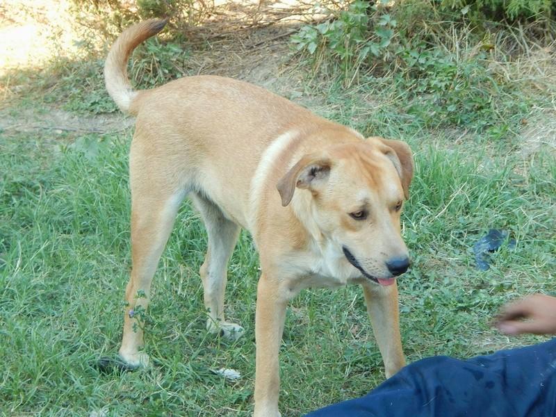 ROSCO un bon chien de famille en FA ds le 67 - SERBIE 29216810