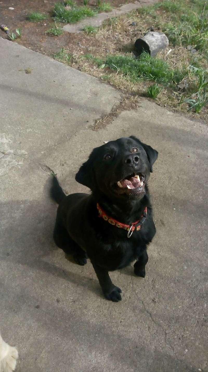 ALIB un chien merveilleux - BULGARIE 29342711