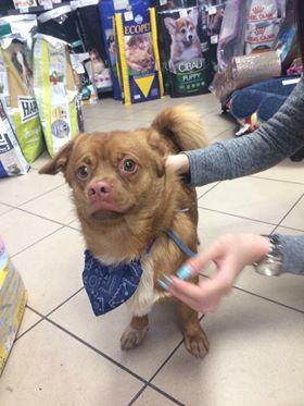 CARLI adorable petit chien - BULGARIE 29550710