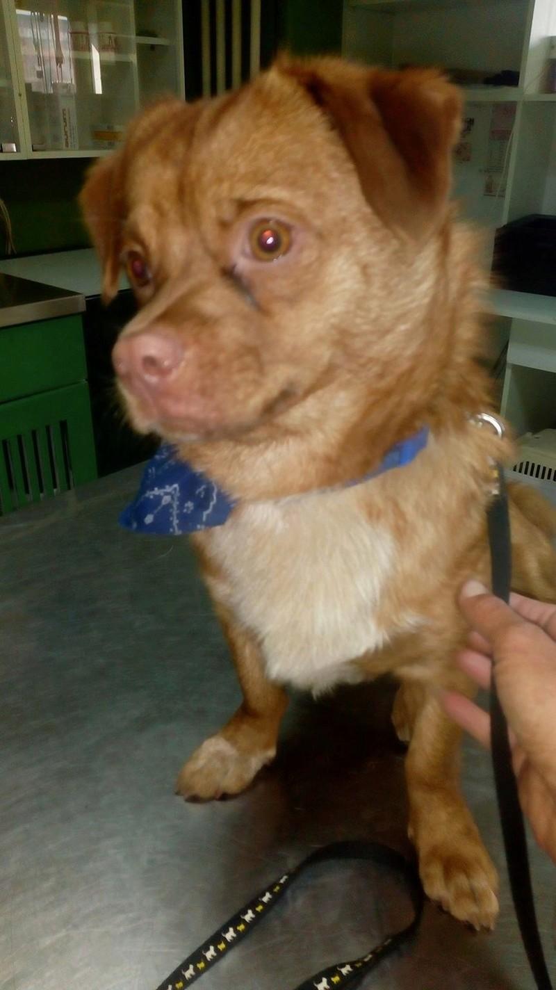 CARLI adorable petit chien - BULGARIE 29747310