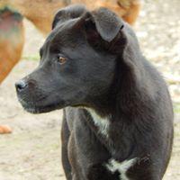 GINGER petit bonbon noir - SERBIE 30443510