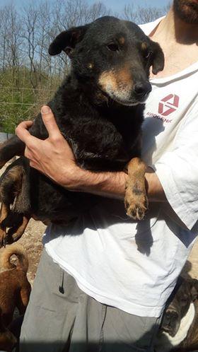 MICI (CRNKA) petite chienne des rues - SERBIE 30704310