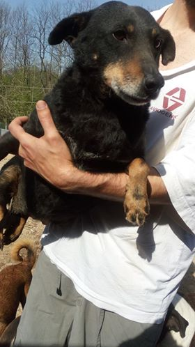 MICI (CRNKA) petite chienne des rues - SERBIE 30707510