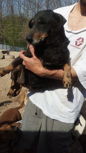 MICI (CRNKA) petite chienne des rues - SERBIE 30708210