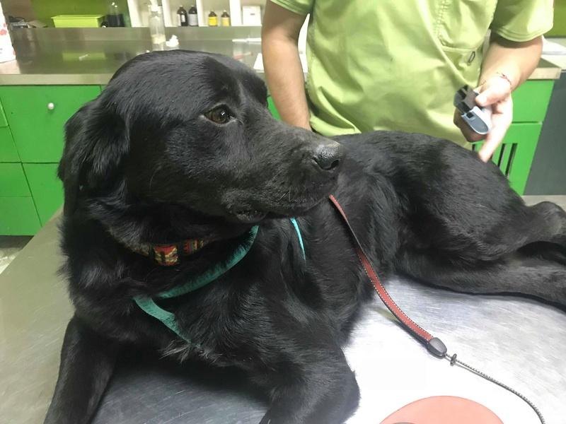 ALIB un chien merveilleux - BULGARIE 30714211