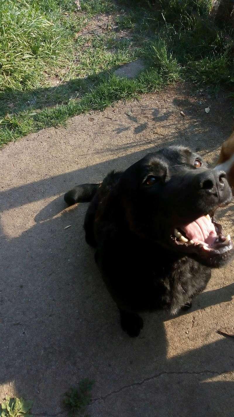 ALIB un chien merveilleux - BULGARIE 31166810