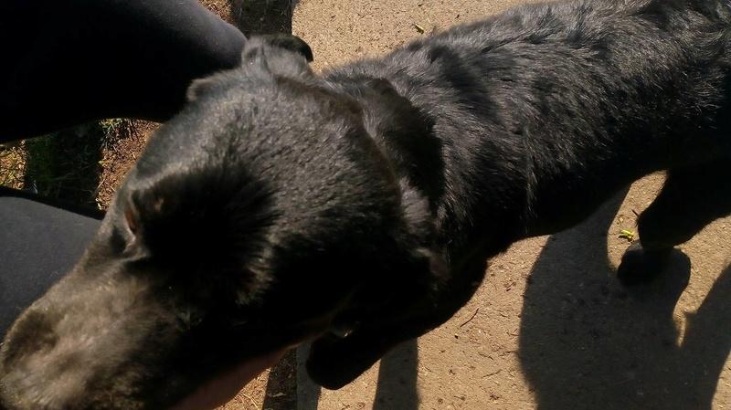 ALIB un chien merveilleux - BULGARIE 31317610
