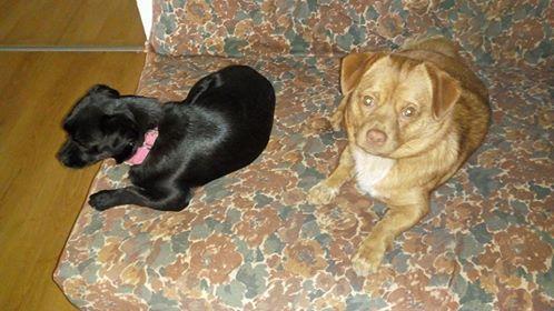 CARLI adorable petit chien - BULGARIE 31408410
