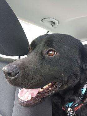ALIB un chien merveilleux - BULGARIE 31498710