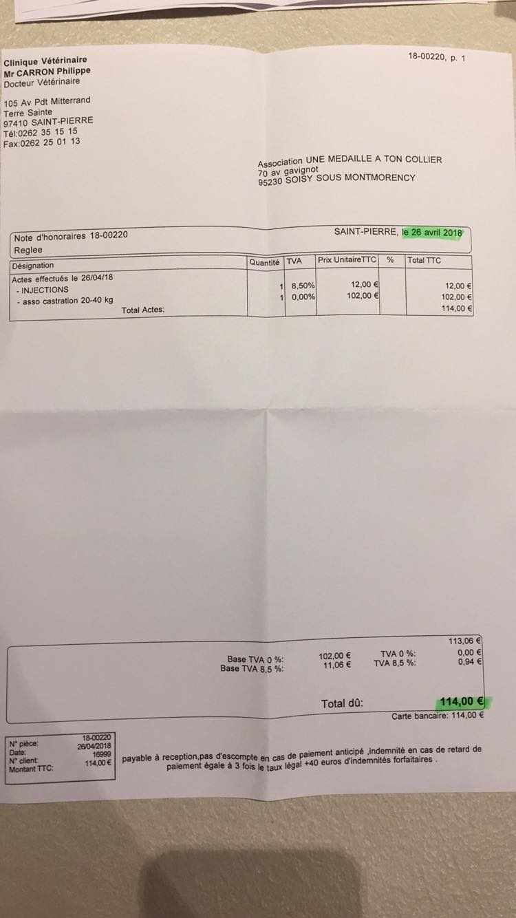 CYPE croisé berger hollandais - REUNION 31662210