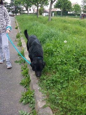 ALIB un chien merveilleux - BULGARIE 31957510