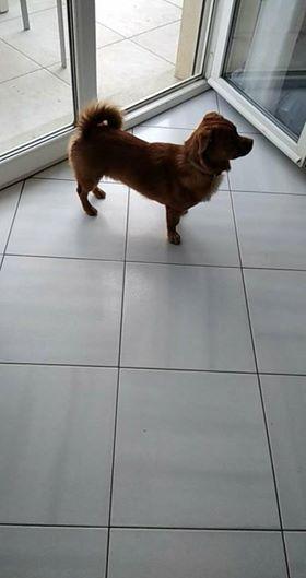 CARLI adorable petit chien - BULGARIE 32855811