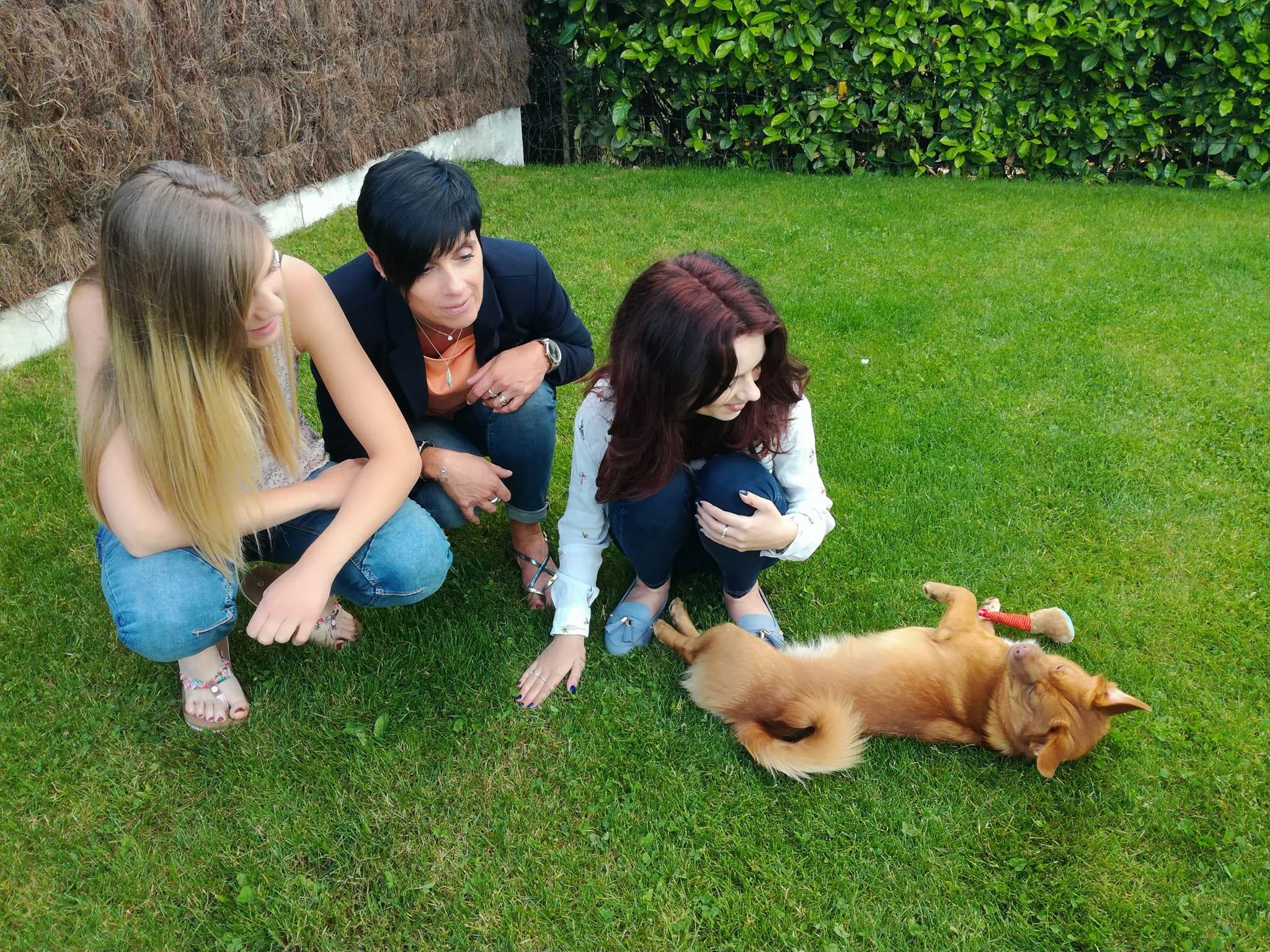 CARLI adorable petit chien - BULGARIE 33500810