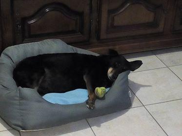 MICI (CRNKA) petite chienne des rues - SERBIE 33579810