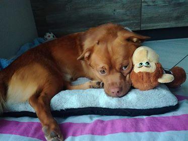 CARLI adorable petit chien - BULGARIE 34032610