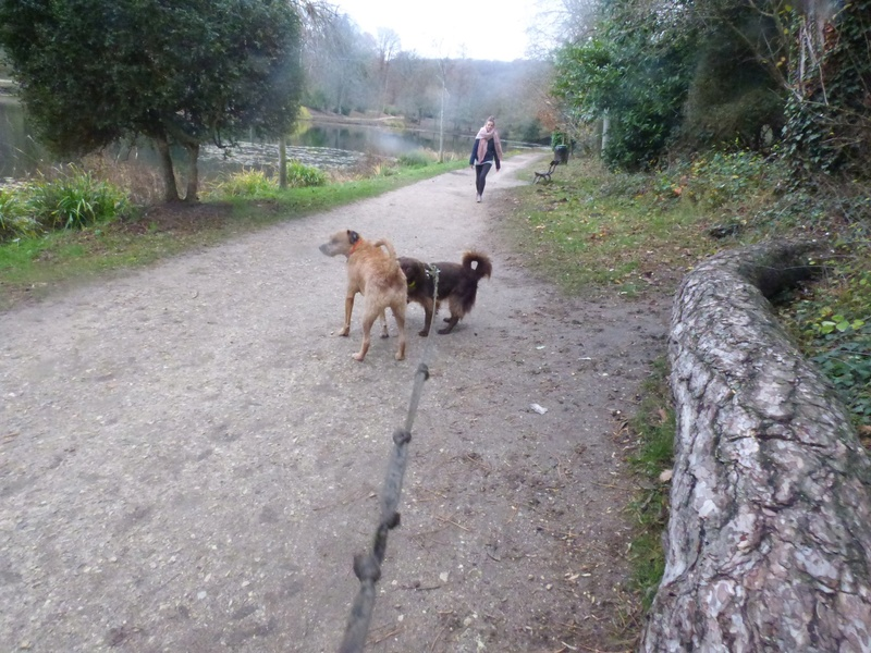 VICTOR un chien en grande souffrance - BULGARIE 47204310