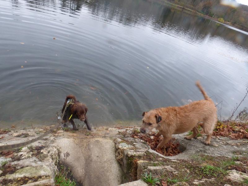 VICTOR un chien en grande souffrance - BULGARIE 47395110