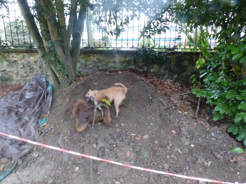 VICTOR un chien en grande souffrance - BULGARIE 47421410