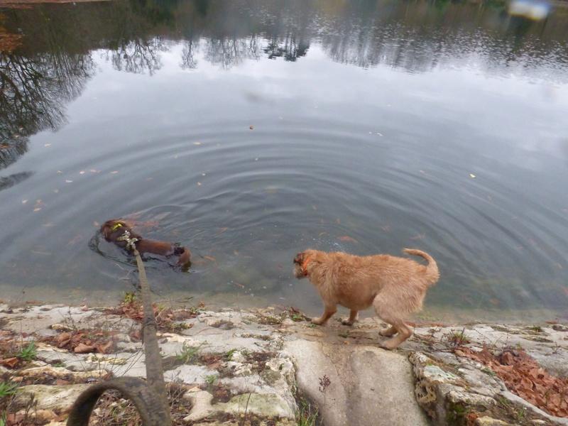 VICTOR un chien en grande souffrance - BULGARIE 47443910