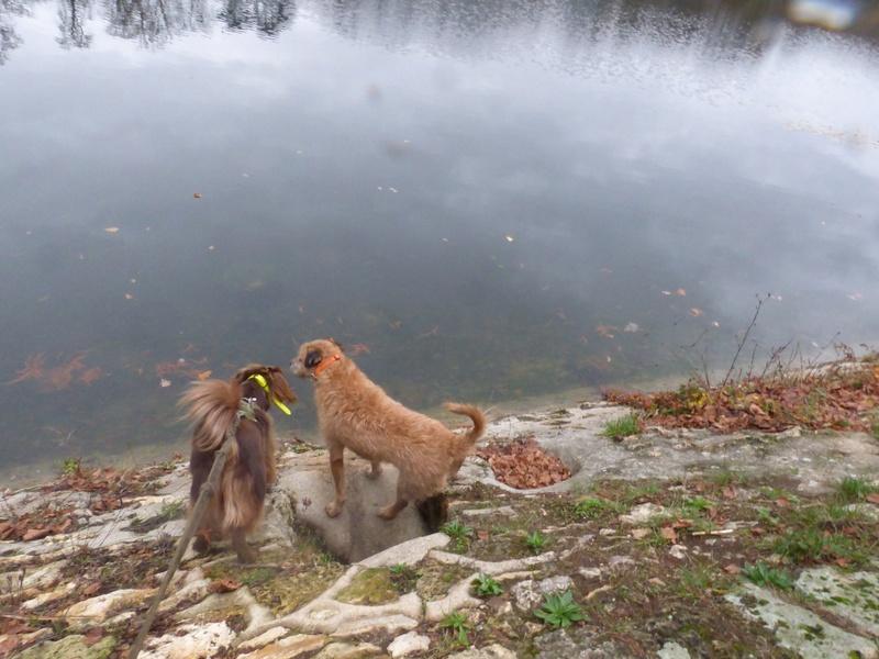 VICTOR un chien en grande souffrance - BULGARIE 47499510
