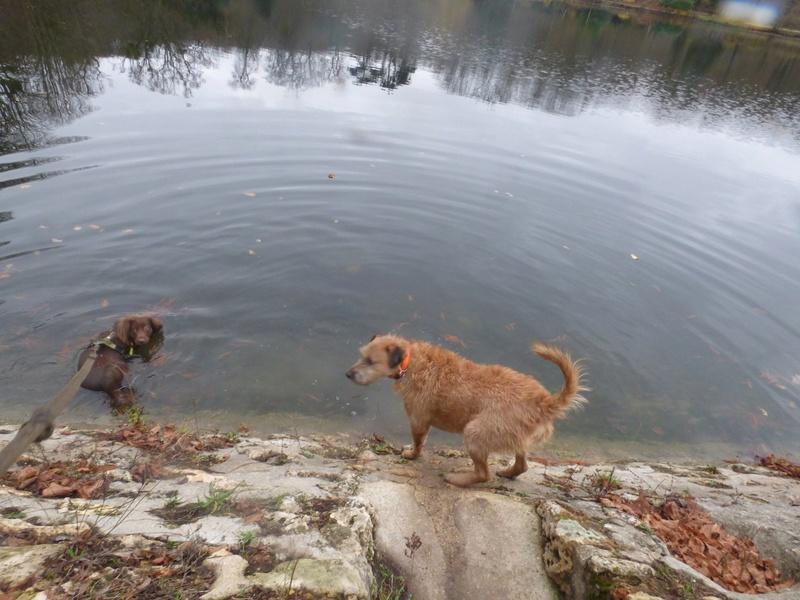 VICTOR un chien en grande souffrance - BULGARIE 47685610