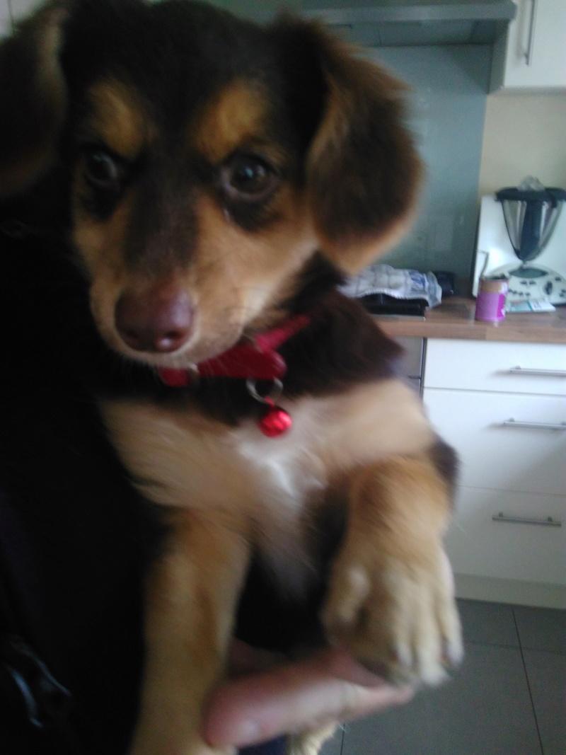 CHOUPETTE un petit chien de poche ! - BULGARIE Img_2014