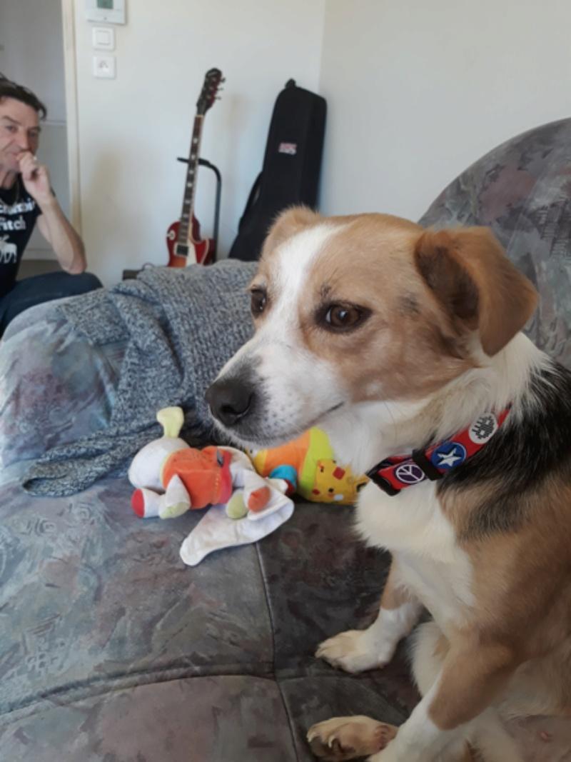 CINCA une petite chienne adorable - SERBIE Img_2032