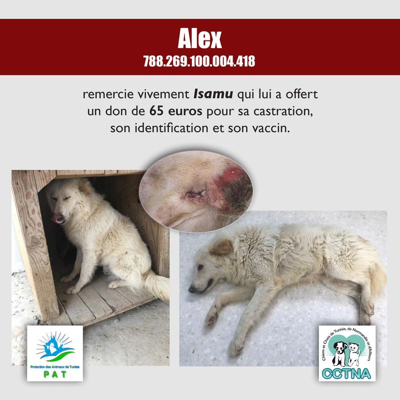 Aide pour stériliser 22 chiens du refuge de la PAT Alexme11