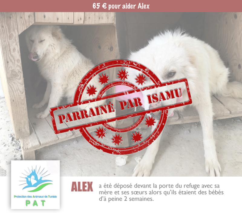 Aide pour stériliser 22 chiens du refuge de la PAT Alexpa10