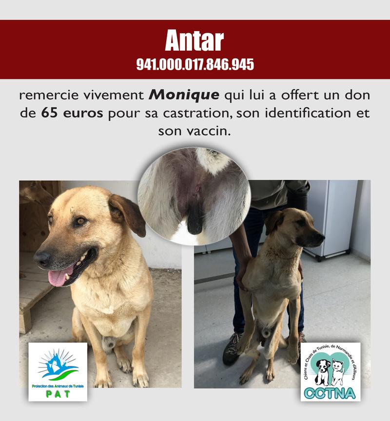 Aide pour stériliser 22 chiens du refuge de la PAT Antarm12