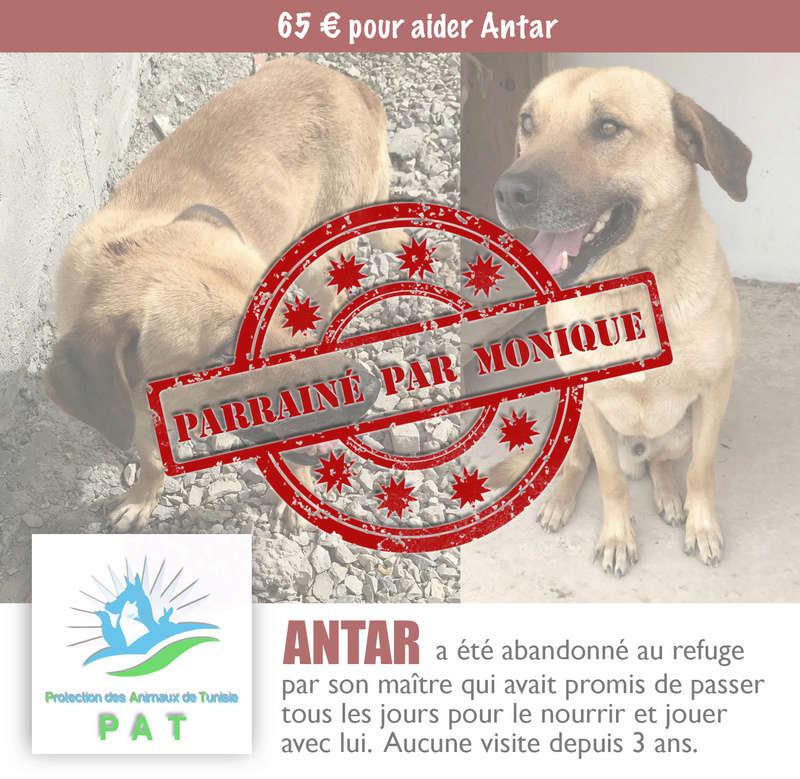 Aide pour stériliser 22 chiens du refuge de la PAT Antarp11