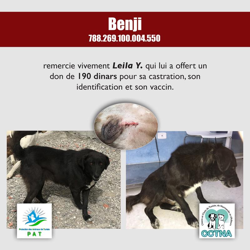 Aide pour stériliser 22 chiens du refuge de la PAT Benjim11